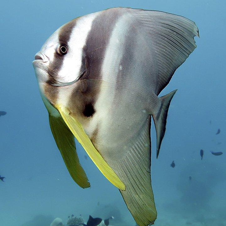 Underwater · Koimakoi · Diseño gráfico, web design & photography · Serena Perrotta